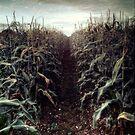 The Corn Field ii by Nikki Smith (Brown)