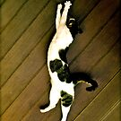 Stretching Cat by withsun