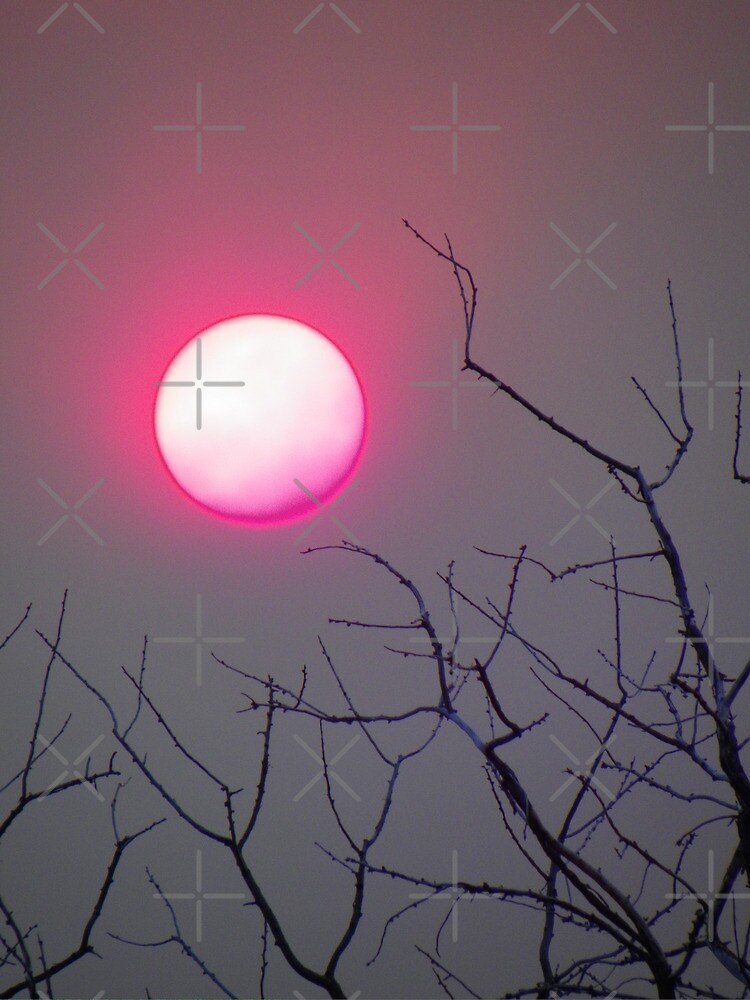 Sunshine Pink by Betty  Town Duncan