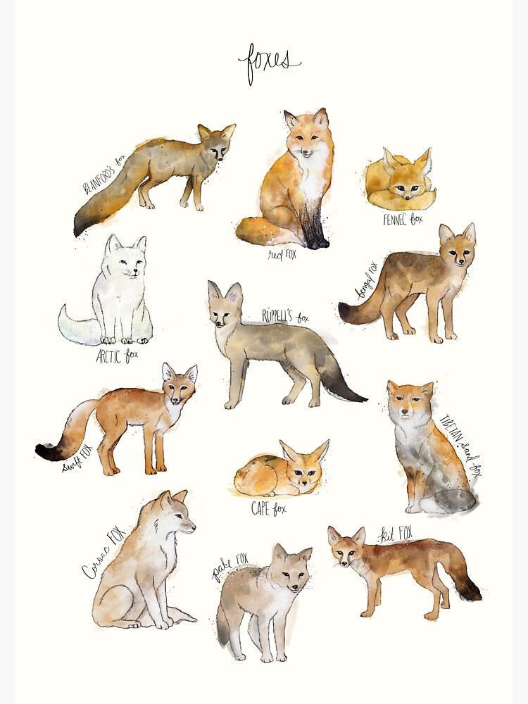 Foxes by AmyHamilton