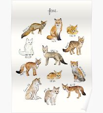 Foxes Poster