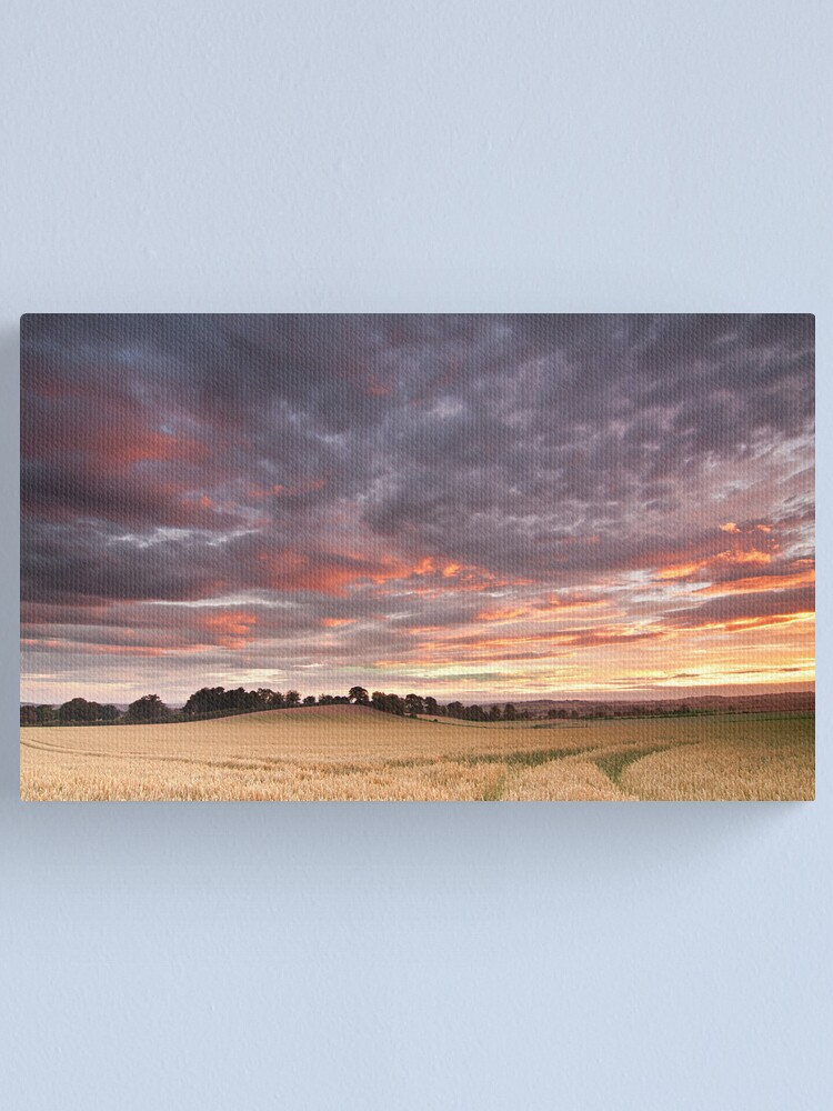 Alternate view of Field with a bump Canvas Print