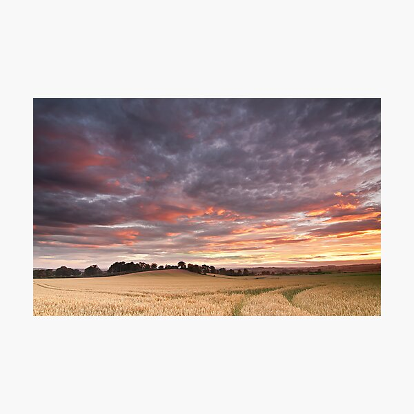 Field with a bump Photographic Print