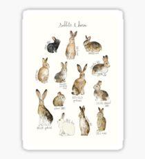 Rabbits & Hares Sticker