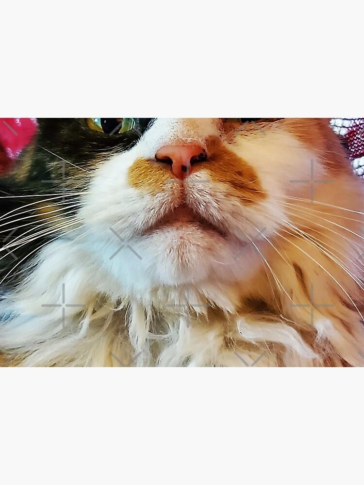 Bazuzu the Catdog by dreamie09