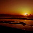 Amber Morning by David Edwards