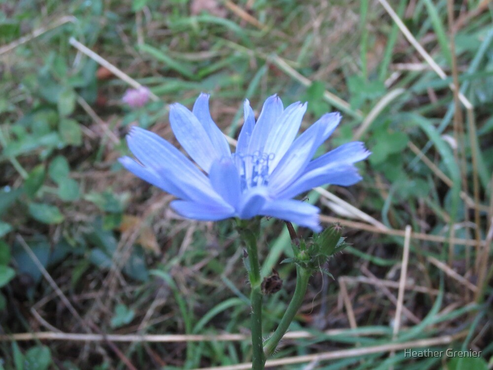 Something Blue by Heather Grenier