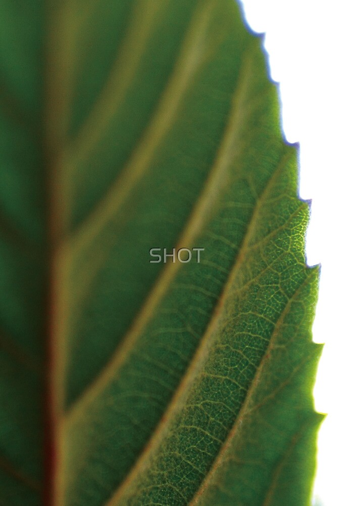Green by SHOT