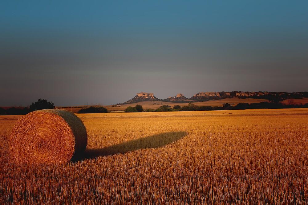 Golden Fields by Jim  Egner