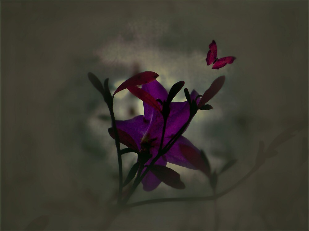 Dawn by Judi Taylor