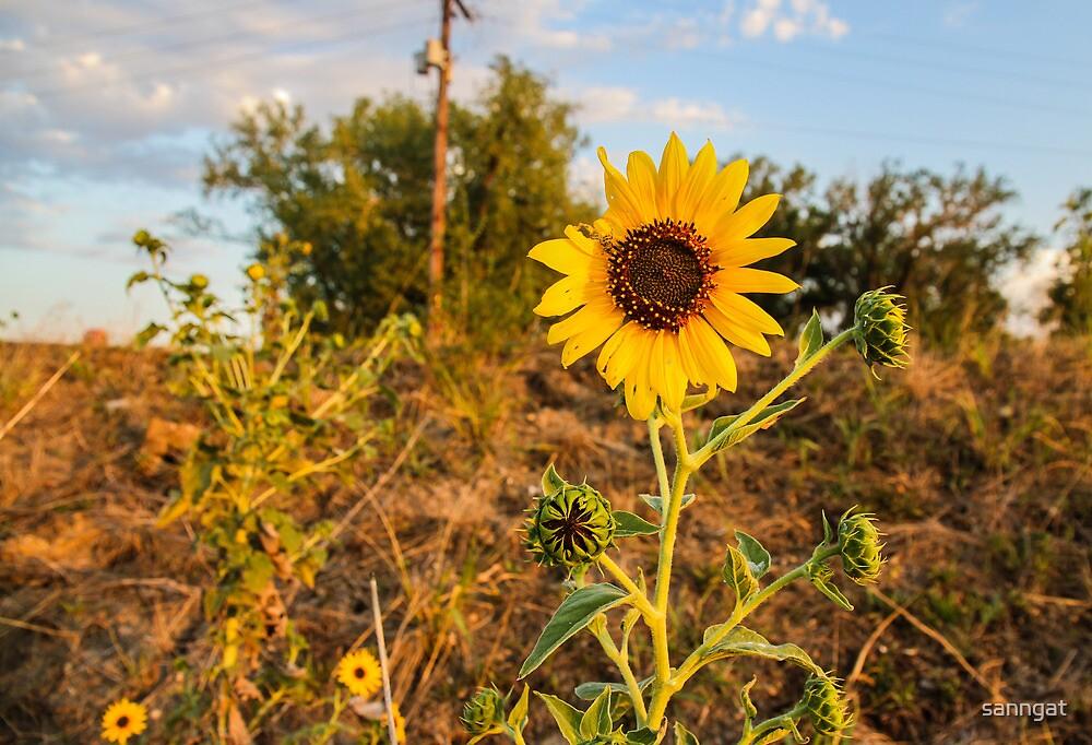 sunflower by sanngat