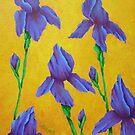 Purple Iris by Allegretto