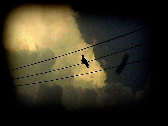 silent bird.... by Aabha bajaj