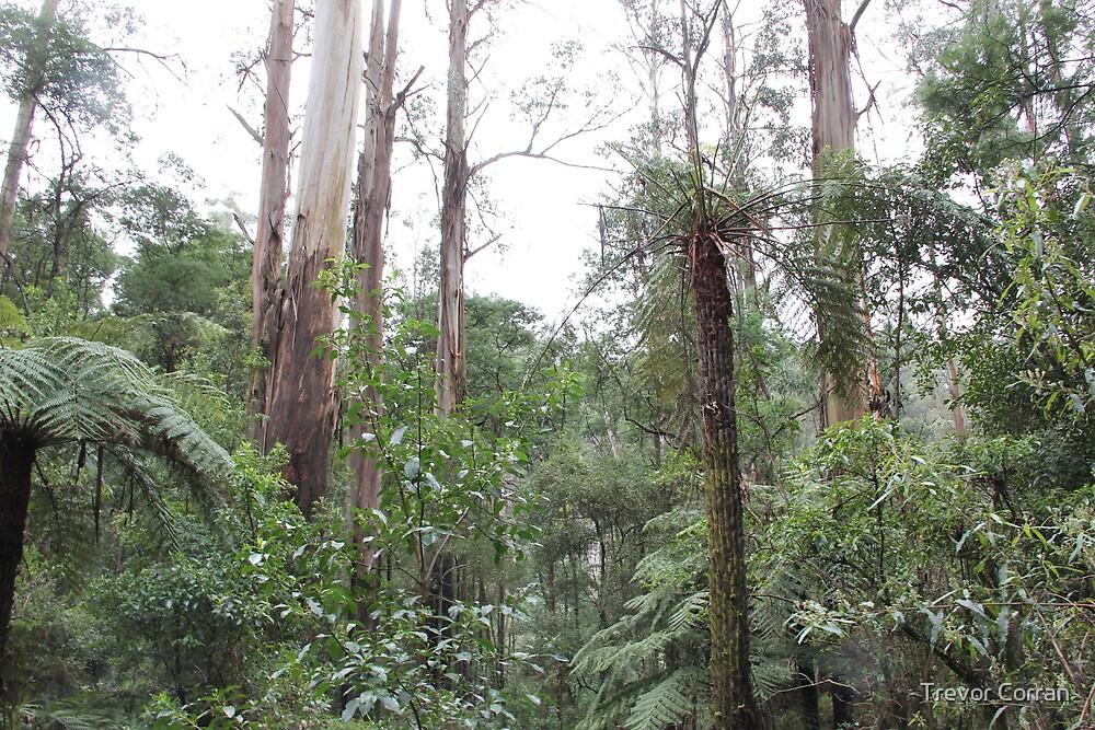 Dandenongs rain forest by Trevor Corran