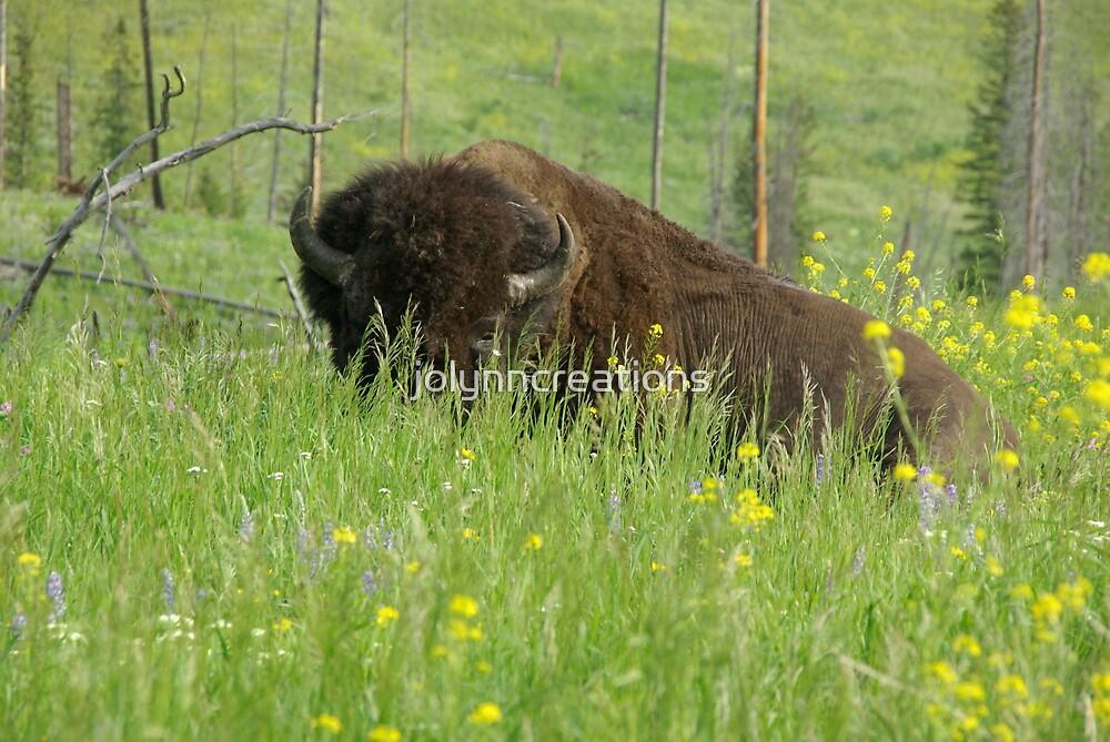 Buffalo - YSNP by jolynncreations