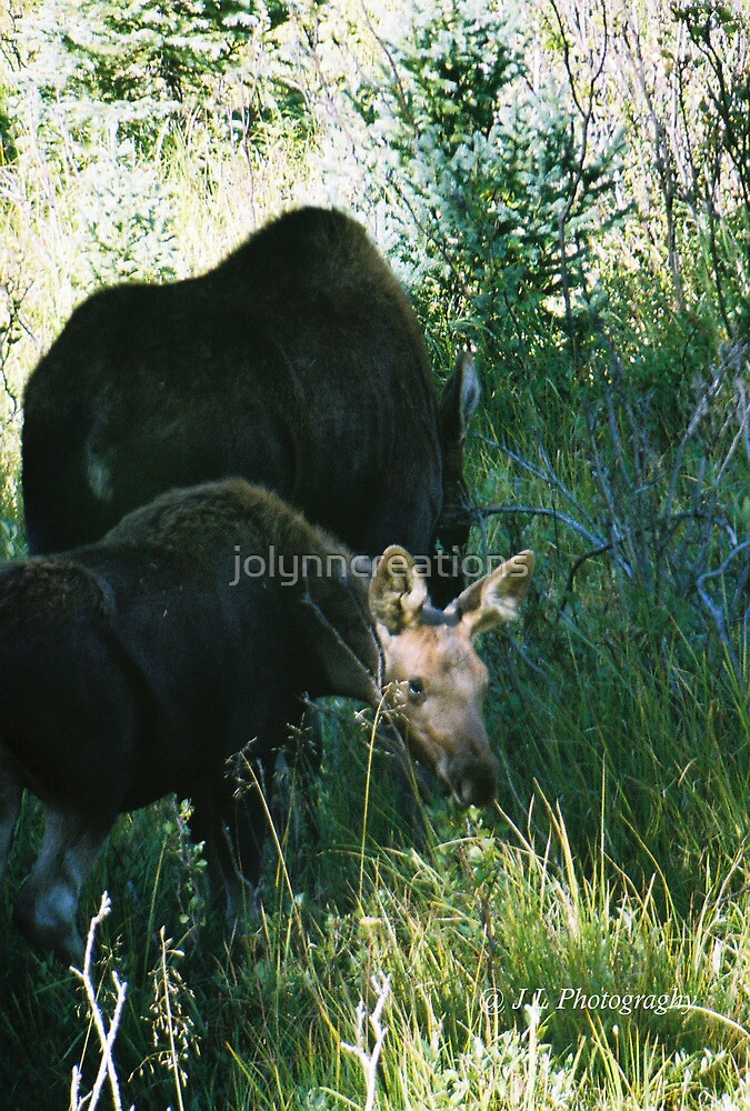 RMNP - Moose by jolynncreations