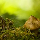 fairy house by Manon Boily