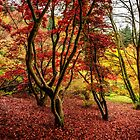 Reds & Yellows  by MarcW
