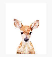 Lámina fotográfica Pequeño ciervo