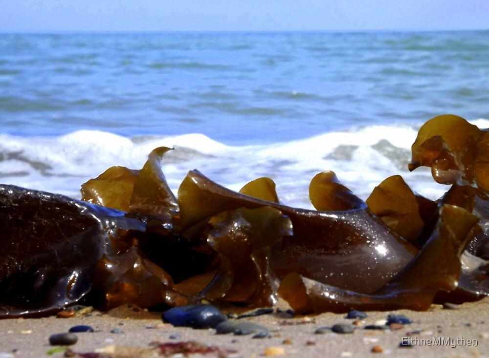 Seaweed at Rosslare by EithneMMythen