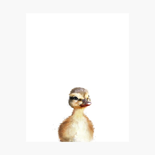Little Duck Photographic Print