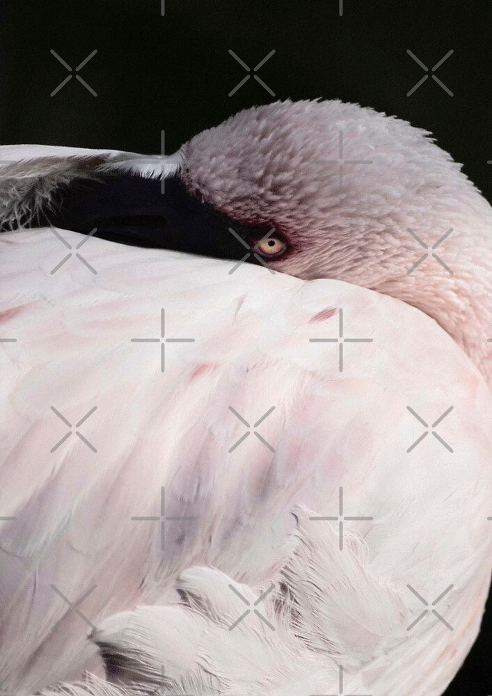 Flamingo by Vac1