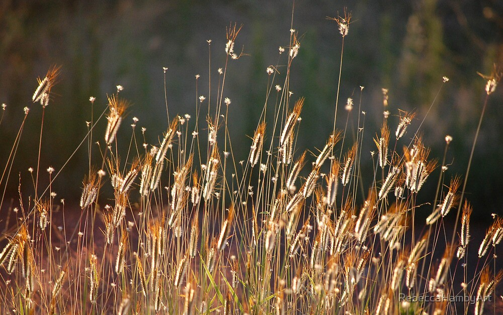 Sun Seeds by RebeccaHambyArt