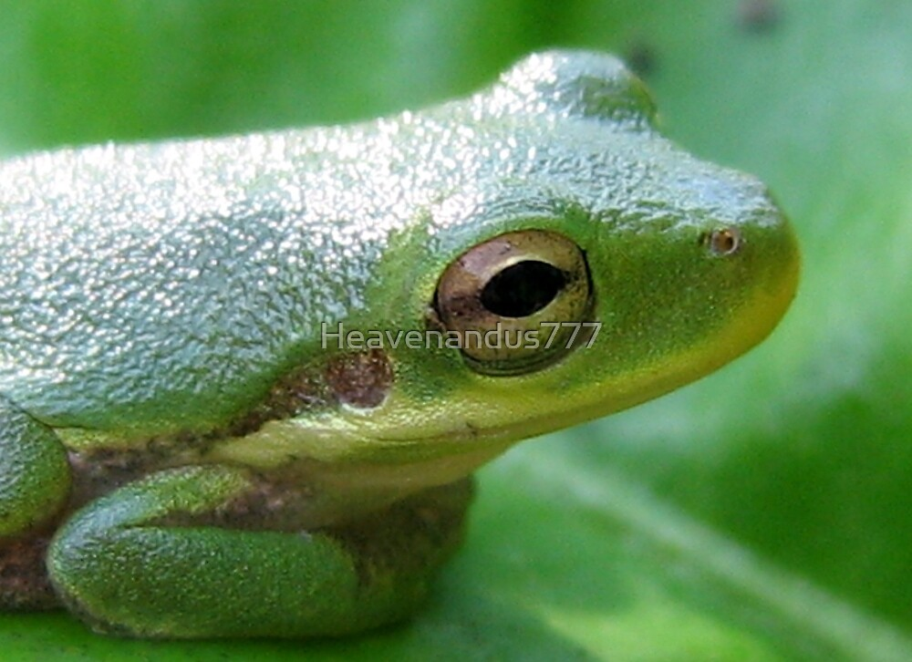 Green Tree Frog by Heavenandus777