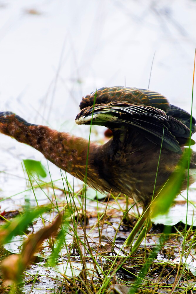 The Little Green Heron Never Could Get Ahead by Nazareth