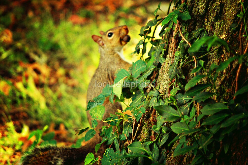 Squirrel in our yard by loriwellsphoto
