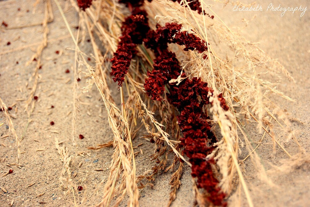Red and Dry Grass by eeliza15