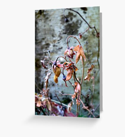 Withered Beauties Greeting Card