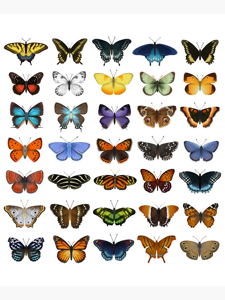 Butterflies of North America by EleanorLutz