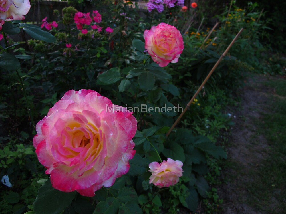 Party in my garden roses by MarianBendeth