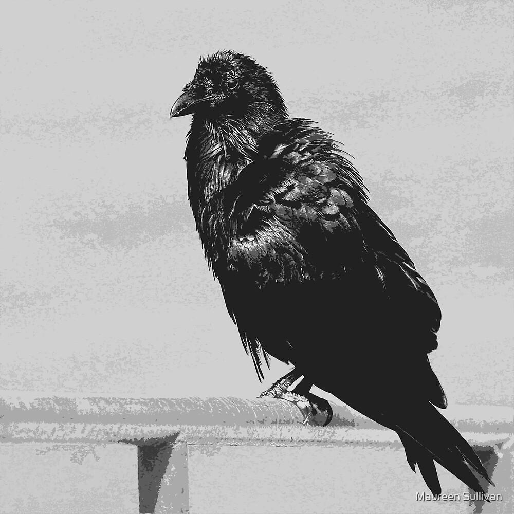Raven by Maureen Sullivan