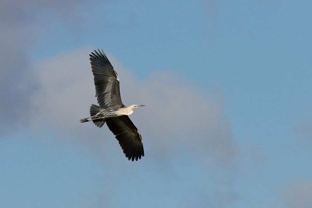 Heron on High by Hedoff