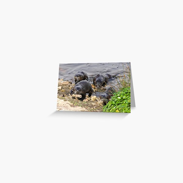 The otters are coming Greeting Card