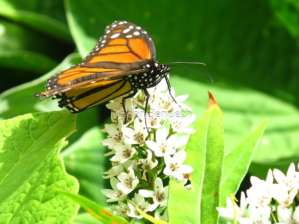 Monarch on a throne of flowers by MarianBendeth