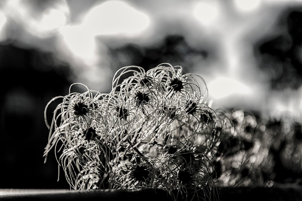 somewhere between a weed and a flower.... by shutterbug261