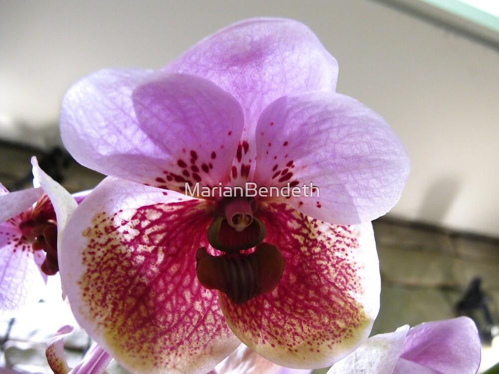 Orchid freedom by MarianBendeth