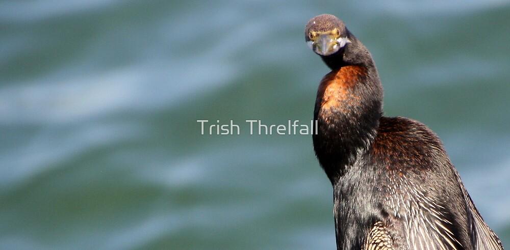 shag on a rock by Trish Threlfall
