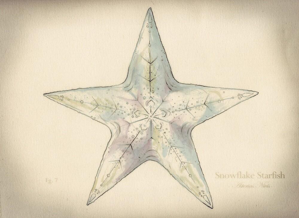 Snowflake Starfish by Ashly Bohinc by SharksEatMeat