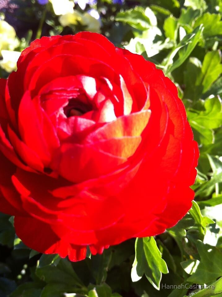 Red flower by HannahCashmore