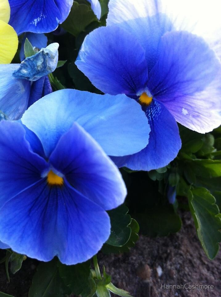 Blue flowers by HannahCashmore