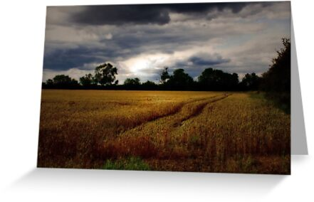 JUST A BEAUTIFUL GOLDEN FIELD  by leonie7