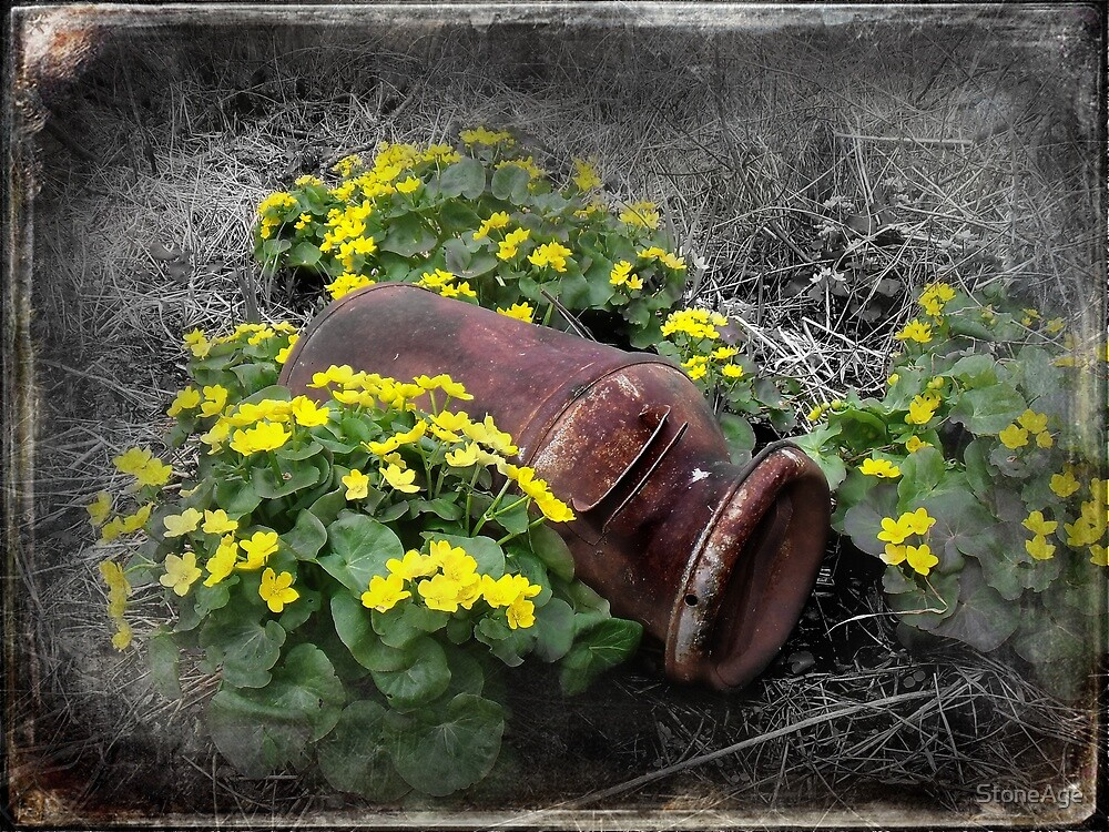 marsh marigolds by StoneAge