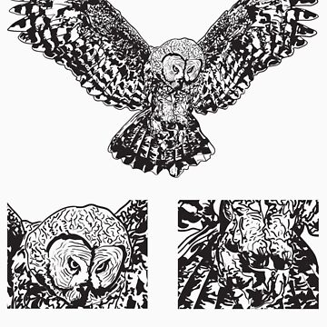 Owl by oscarrothe
