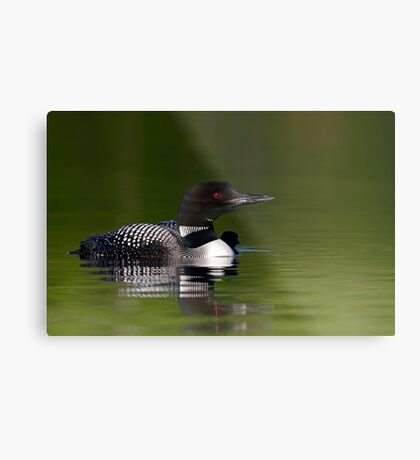By her side - Common loon and chick Metal Print