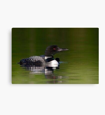 By her side - Common loon and chick Canvas Print