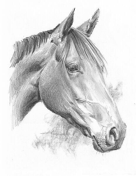 Horse drawing by Mike Theuer